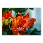 African Tulip Tree Table Number