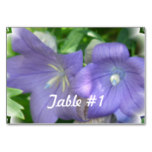 Balloon Flower Blossom Card