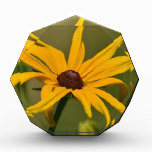 Black Eyed Susan Solitude Award