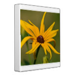 Black Eyed Susan Solitude Binder