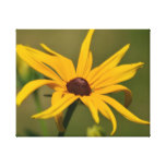 Black Eyed Susan Solitude Canvas Print