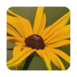 Black Eyed Susan Solitude Coaster
