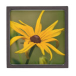Black Eyed Susan Solitude Gift Box