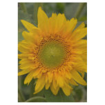 Black Eyed Susan Solitude Wood Poster