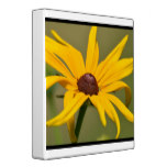 Blooming Black Eyed Susan 3 Ring Binder