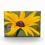 Blooming Black Eyed Susan Acrylic Award