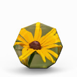 Blooming Black Eyed Susan Award