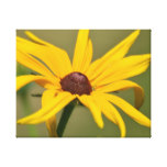 Blooming Black Eyed Susan Canvas Print