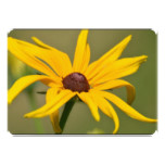 Blooming Black Eyed Susan Card