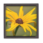 Blooming Black Eyed Susan Keepsake Box