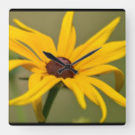 Blooming Black Eyed Susan Square Wall Clock