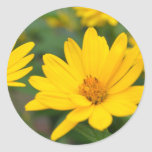 Blooming False Sunflowers Classic Round Sticker