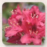 Blooming Red Rhododendron Blossoms Flowering Beverage Coaster