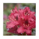 Blooming Red Rhododendron Blossoms Flowering Ceramic Tile