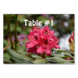 Blooming Red Rhododendron Blossoms Flowering Table Number