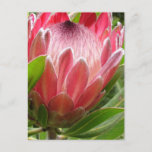 Customize Product Postcard