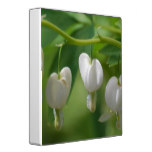 Delicate White Bleeding Heart 3 Ring Binder