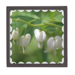 Delicate White Bleeding Heart Gift Box