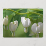 Delicate White Bleeding Heart Invitation