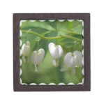 Delicate White Bleeding Heart Keepsake Box