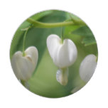 Delicate White Bleeding Heart Paper Plate