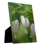 Delicate White Bleeding Heart Plaque