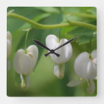 Delicate White Bleeding Heart Square Wall Clock