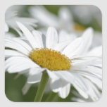 Field of Daisies Square Sticker