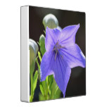 Flowering Balloon Flowers Binder