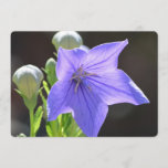 Flowering Balloon Flowers Invitation