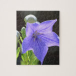 Flowering Balloon Flowers Jigsaw Puzzle