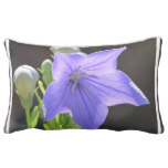 Flowering Balloon Flowers Lumbar Pillow