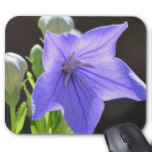 Flowering Balloon Flowers Mouse Pad