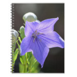 Flowering Balloon Flowers Notebook