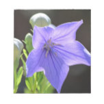 Flowering Balloon Flowers Notepad