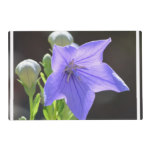Flowering Balloon Flowers Placemat