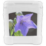 Flowering Balloon Flowers Rolling Cooler