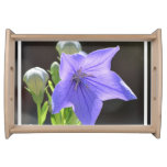 Flowering Balloon Flowers Serving Tray