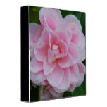 Flowering Pink Camelia 3 Ring Binder