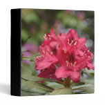 Flowering Red Rhododendron Bush in Bloom 3 Ring Binder