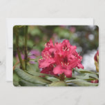 Flowering Red Rhododendron Bush in Bloom Invitation