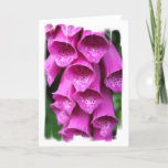 Foxglove Plant Greeting Card