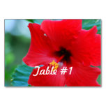 Hibiscus Flowers Table Number
