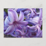 Hyacinth Flowers Postcard