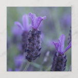 Lavender Flower Photo Invitations