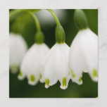 Lily of the Valley Invitations