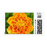 Orange Marigold Postage Stamp