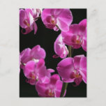 Orchid Blossoms Postcard