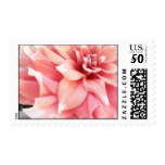 Pale Pink Dahlia Postage