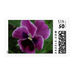 Pansy Picture Postage Stamp